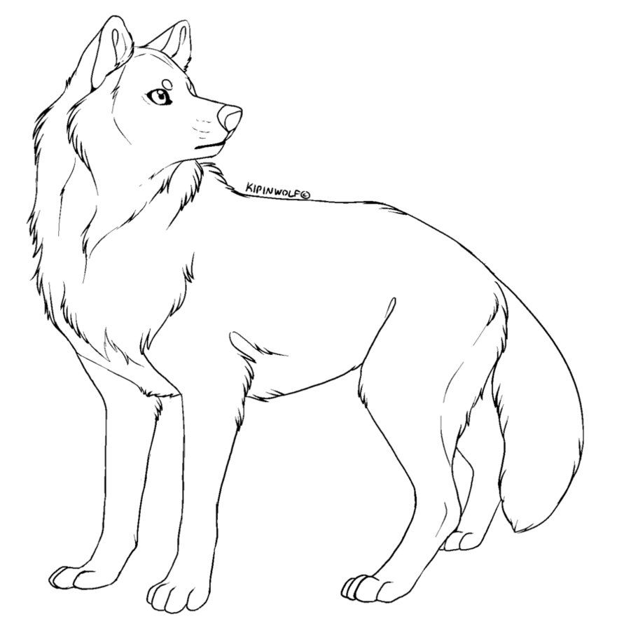 Photo of Free lineart – wolf by Kipine on DeviantArt