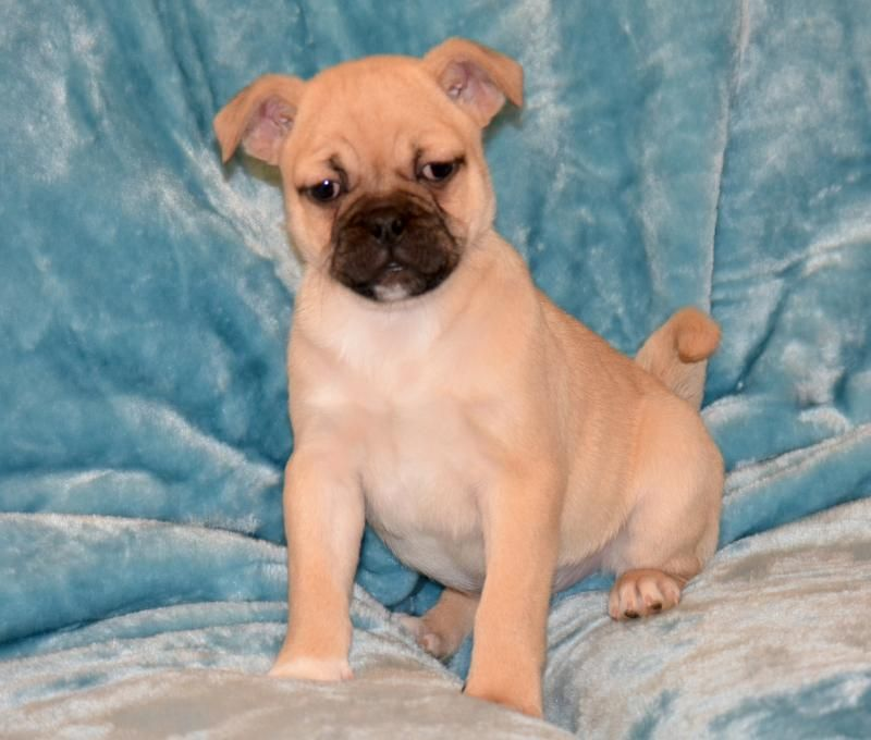 White Golden Retriever Puppies For Sale Canada 2021