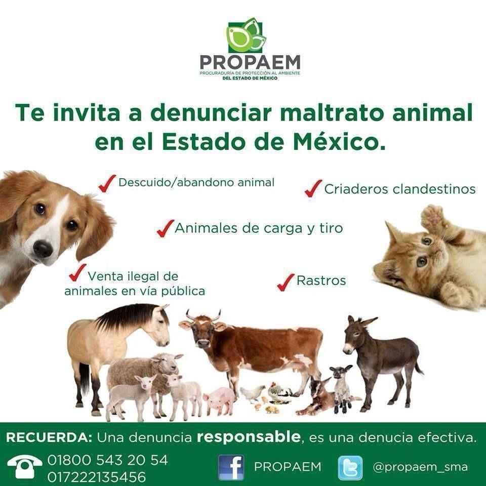 Actúa de inmediato si sabes de alguien que maltrate a algún animal.