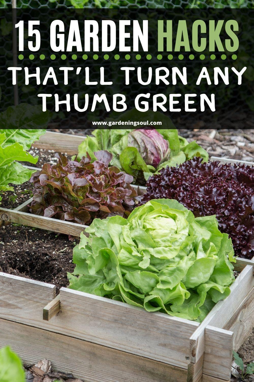 15 Garden Hacks That Ll Turn Any Thumb Green Gardening Tips