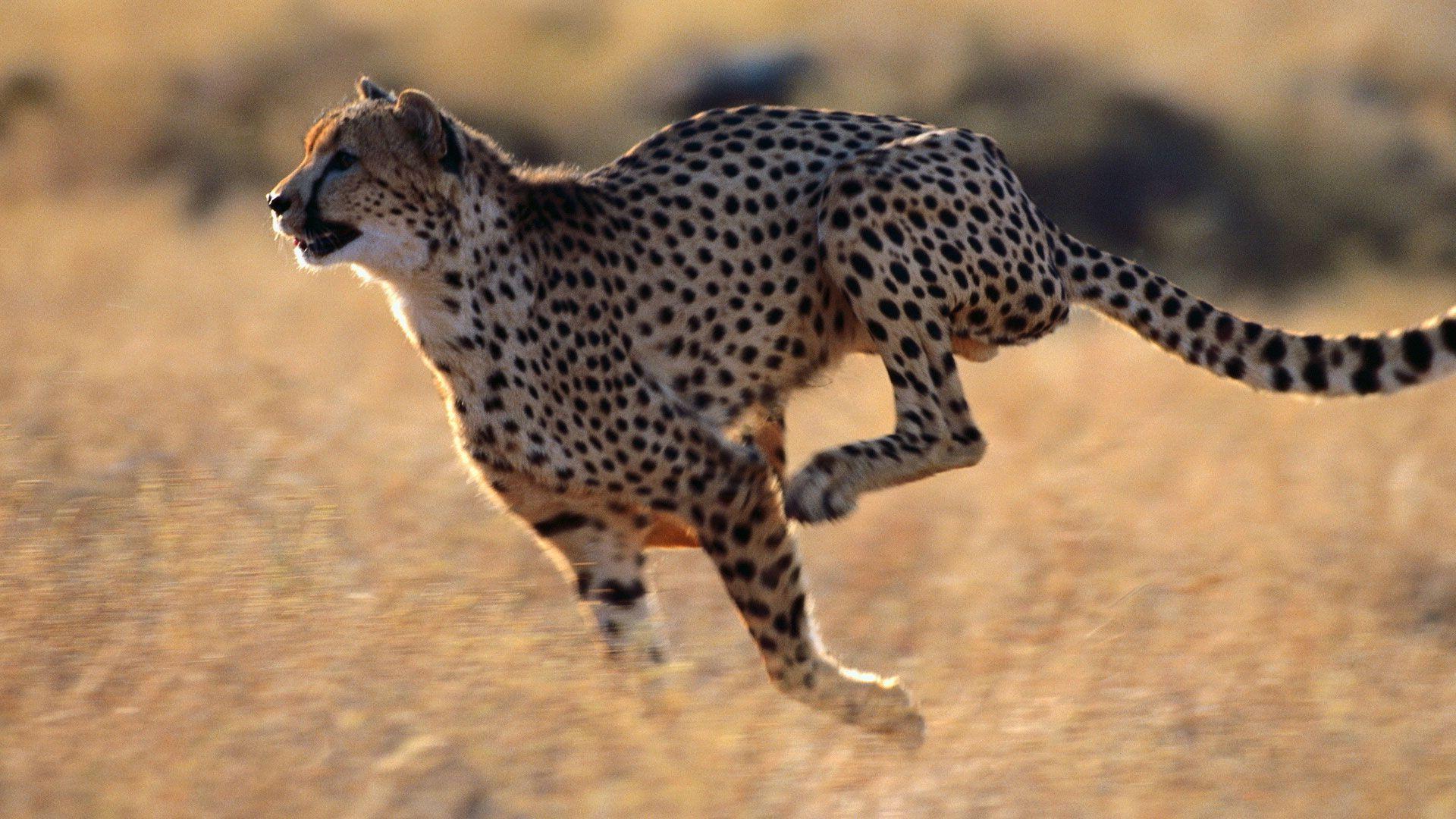 Живые картинки животных двигающиеся, юбилеем