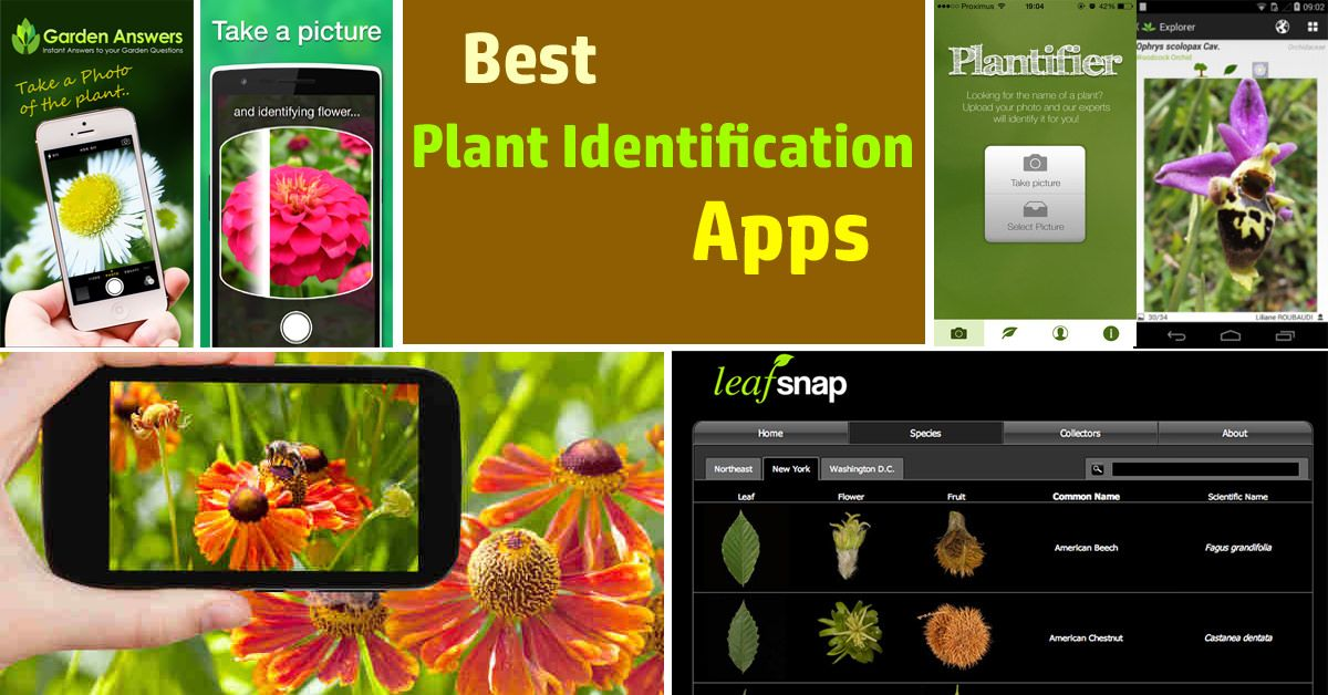 Best Plant Identification Apps for 2020 | Cool plants ...