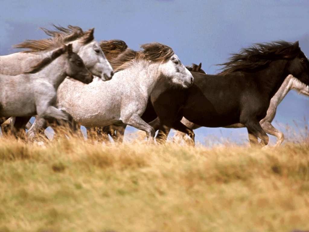 Popular Wallpaper Horse Flicka - 0ea029cd02bc98c2a05a5b0b90e518e7  Graphic_434617.jpg