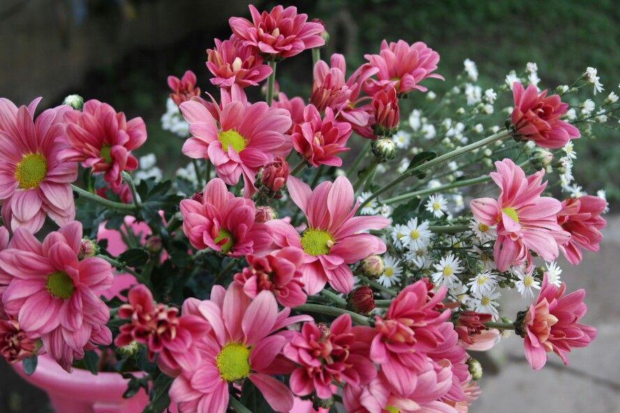 Adorable shocking pink flower beautiful flower pinterest adorable shocking pink flower mightylinksfo