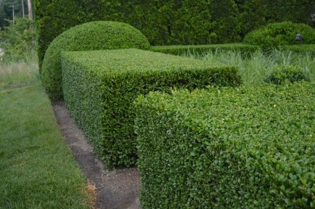 Top 10 Most Amazing Shaping Trees And Shrubs | Amenagement jardin ...