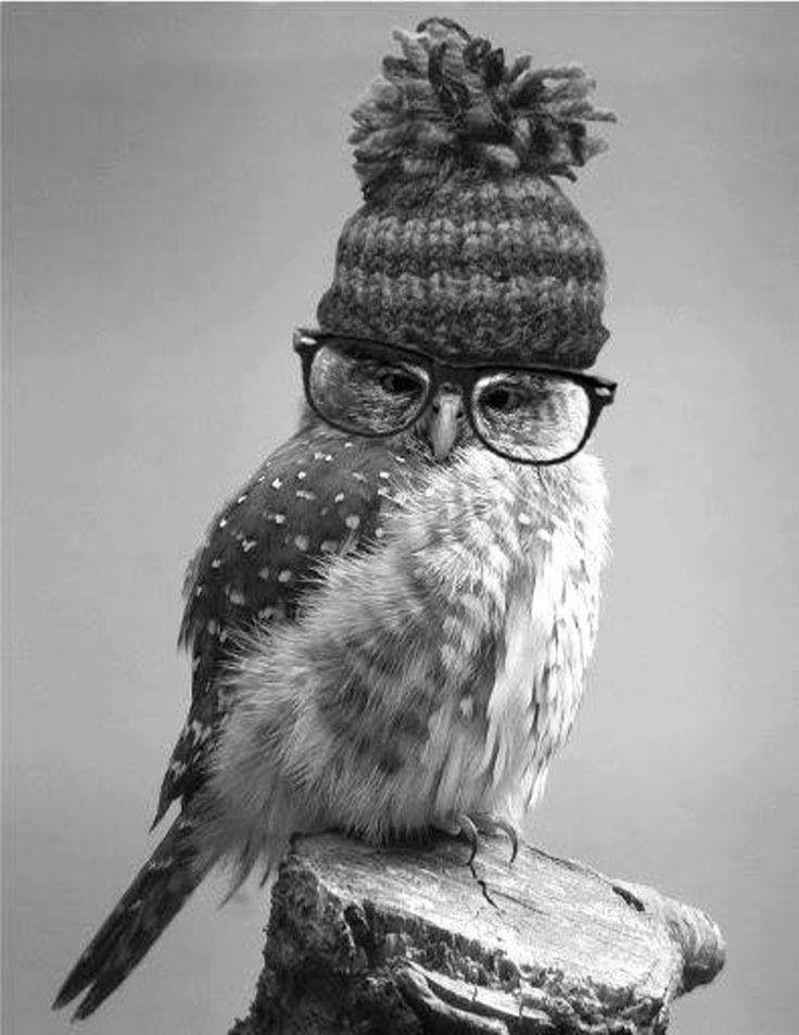 フクロウがニット帽を被っている可愛い壁紙