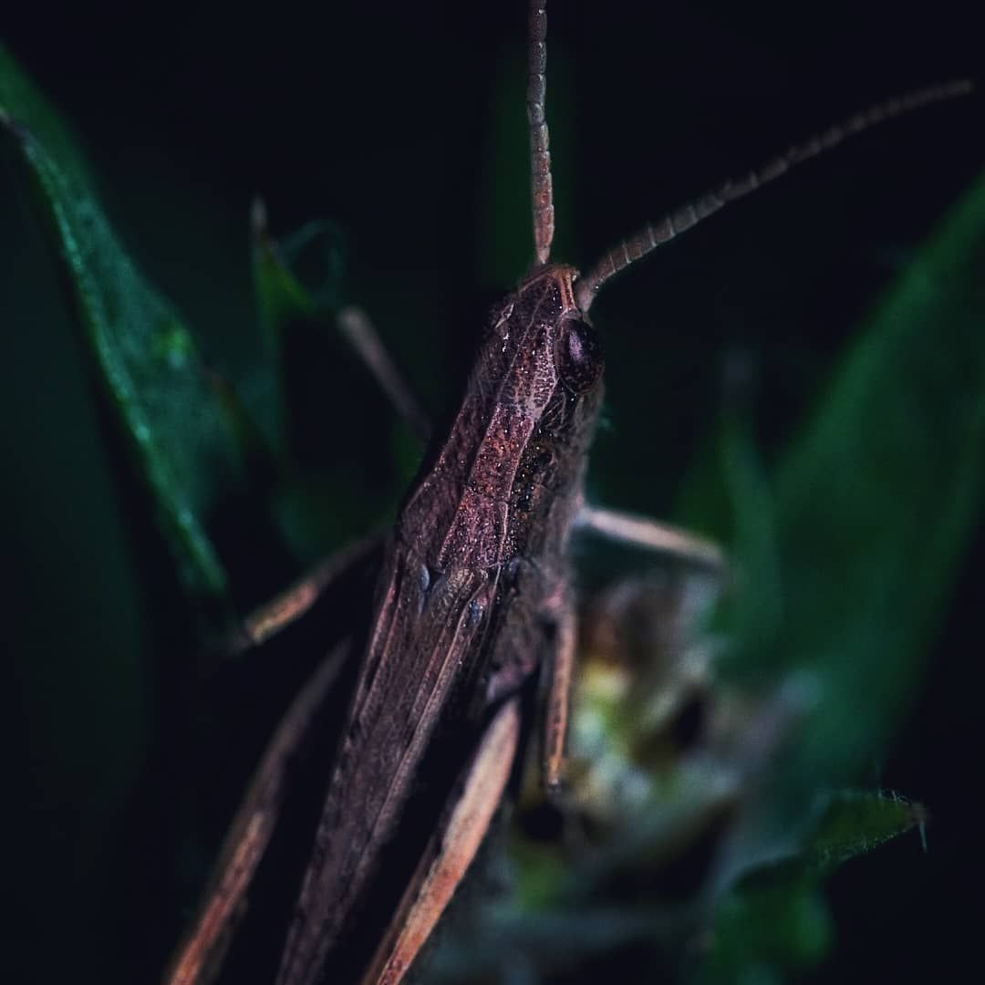 ✔pictame webstagram 🔥🔥🔥 Instagram post by @stigmatized85 | #makroliebe #makrowelt #makro_leidenschaft #macro_addiction
