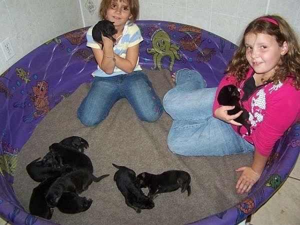 Pregnant Dog Newborn Puppies Puppy Kennel