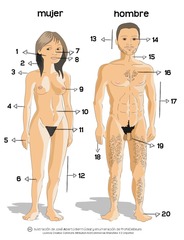 Las partes del cuerpo humano (B1) ~ Actividad online para practicar ...