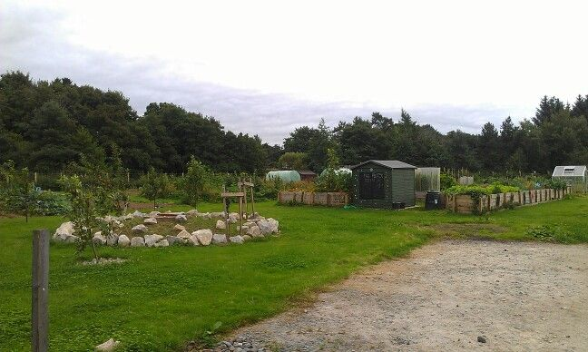 The allotments by Gladstone Road Park