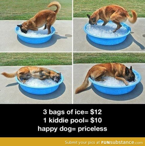 For A Hot Day Funsubstance Pets Happy Dogs Dog Parents