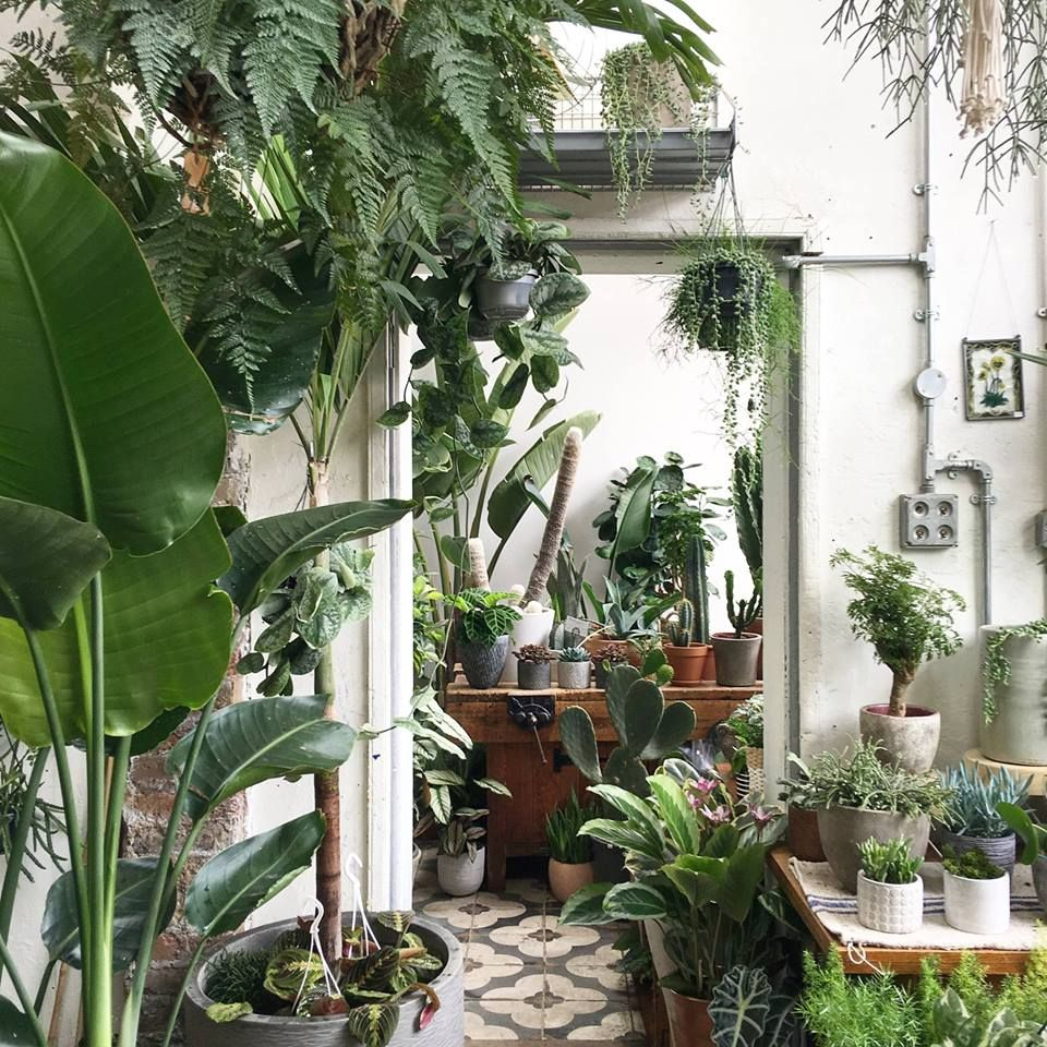 conservatory-archives-london-houseplant-house-plants-shop-hackney-gardenista.jpg 960×960 pixels