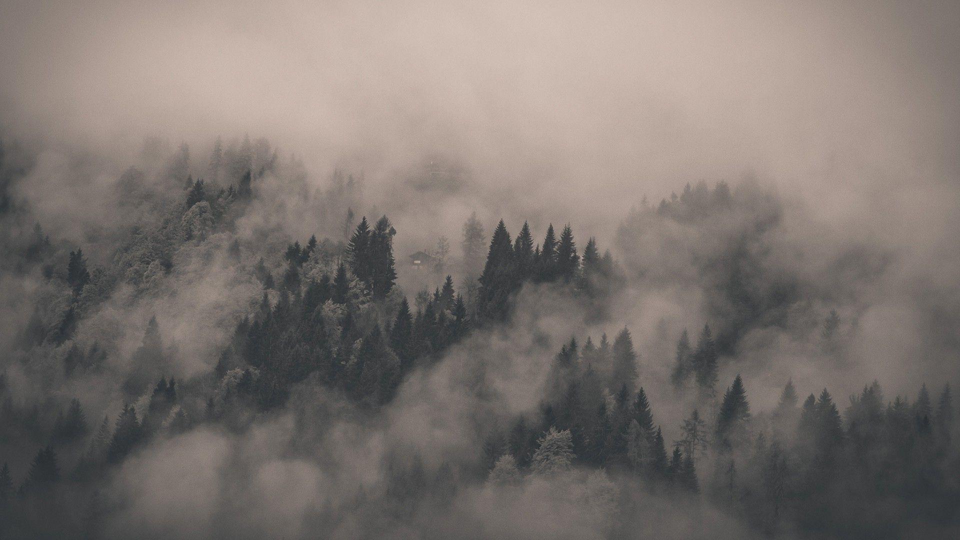 1920x1080 Foggy Forest Wallpaper 13858 Forest Wallpaper Foggy Forest Landscape Wallpaper