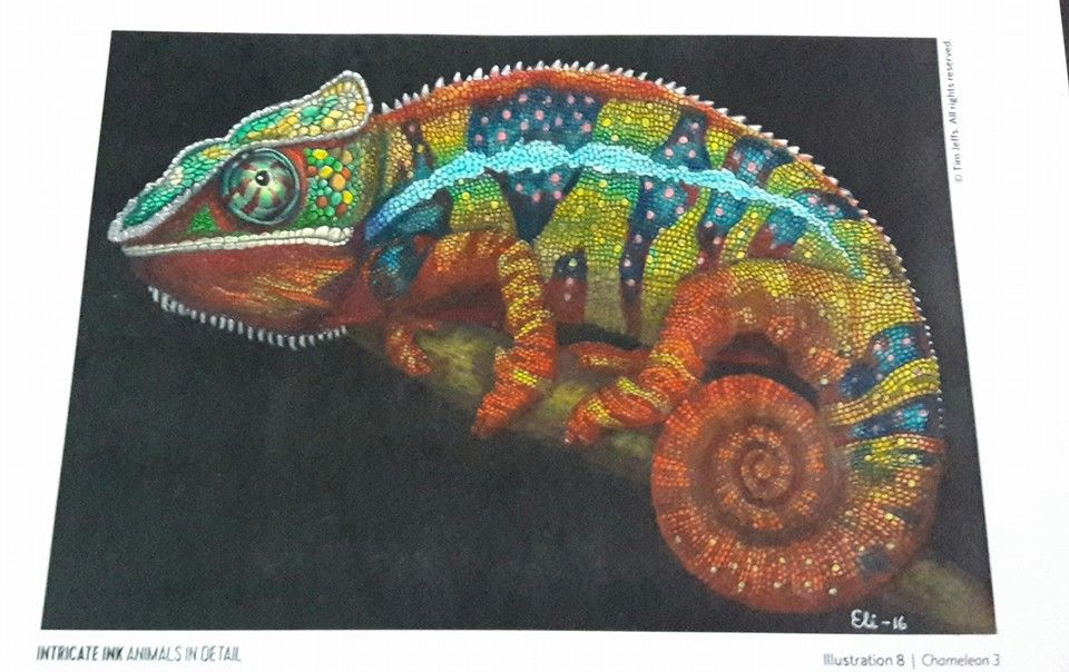 50+ Chameleon coloring page for adults ideas