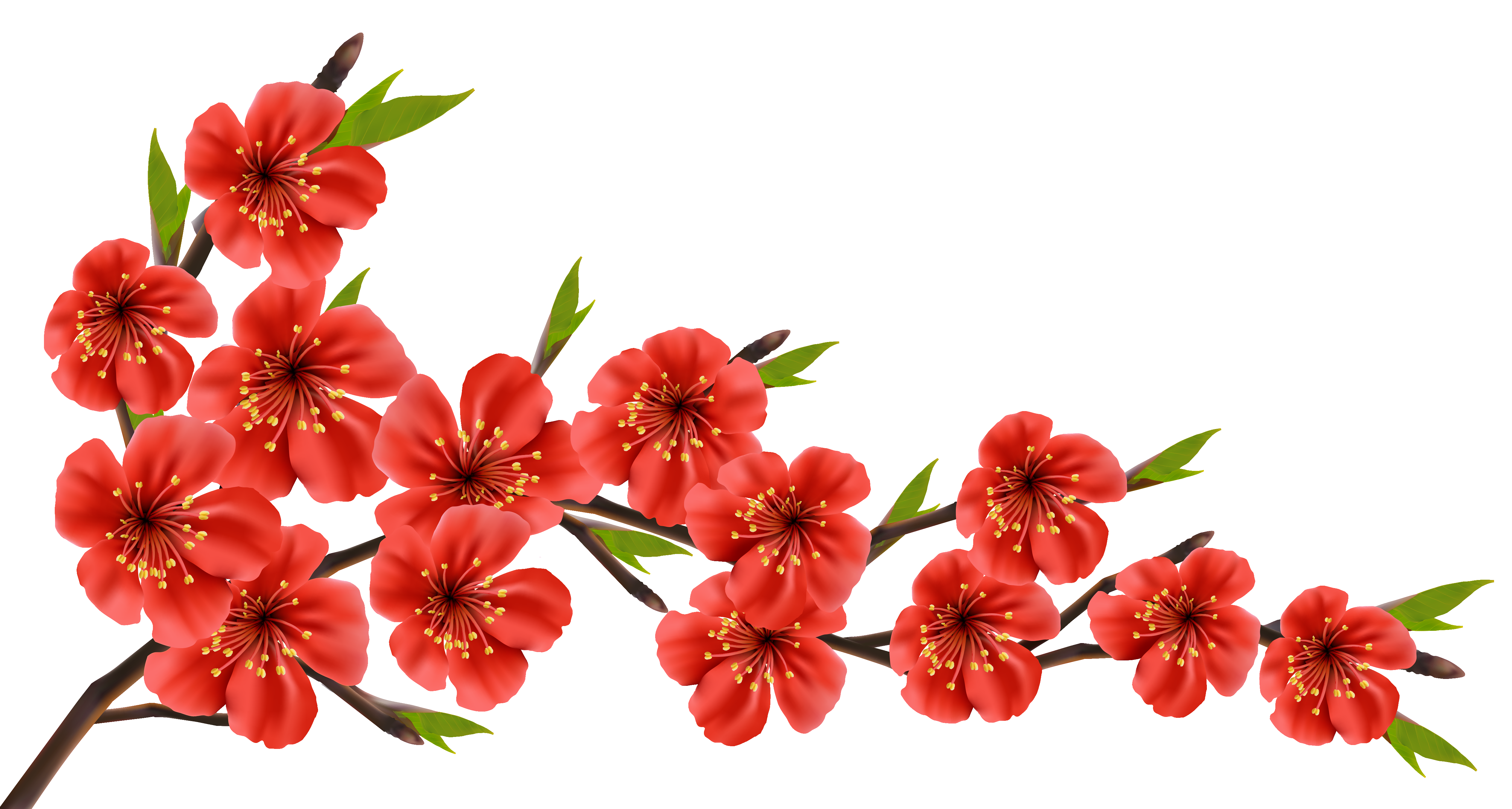 Red Spring Branch PNG Clipart Image   Clip art   Pinterest ...