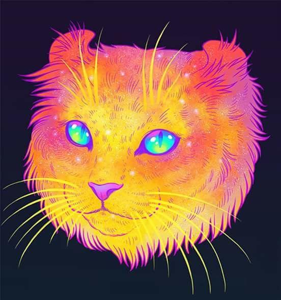 Cat cosmic