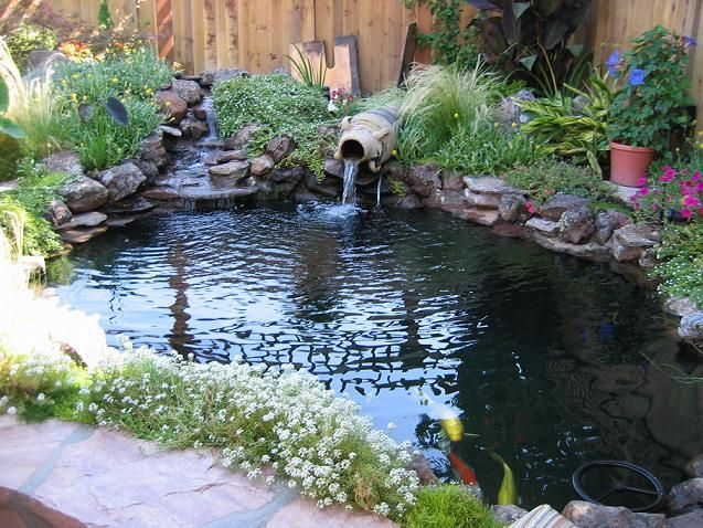 Waterfall ideas for koi pond google search aquaponics for Outside fish pond ideas