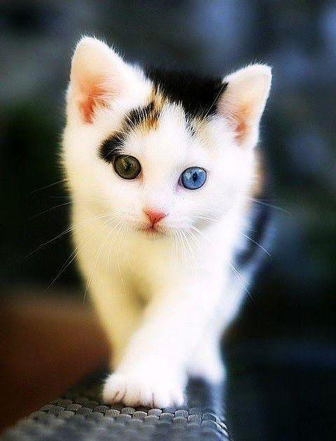 Menakjubkan 17 Gambar Gambar Kucing Lucu Wallpaper Kucing Lucu For Android Apk Download Lukisan Diamond 5d Gambar Gambar Kucing Lucu Kucing Foto Kucing Lucu