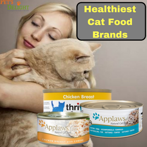 Choosing From The Healthiest Cat Food Brands All About Pets