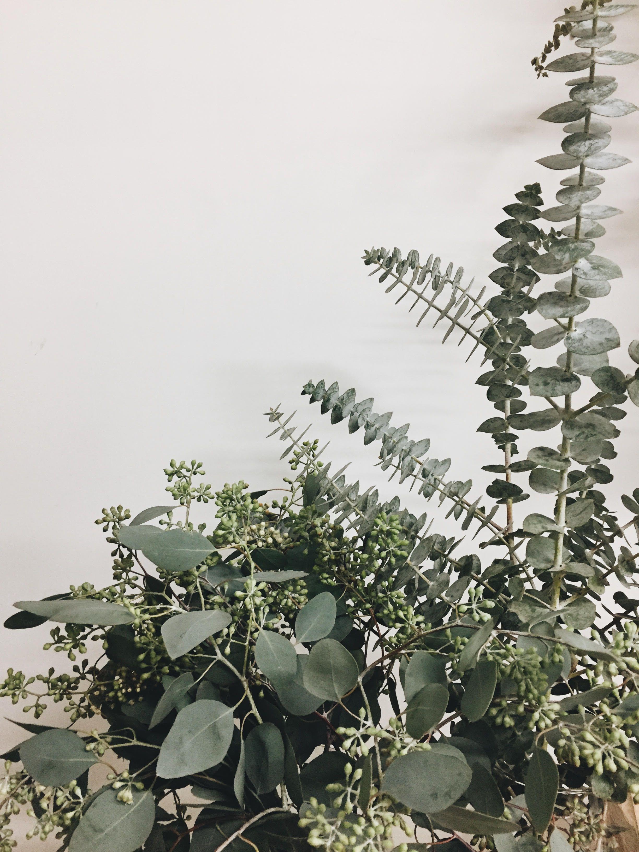 LAURIE ANNE - Atelier Fleur - Les fleurs sont soyeusement sélectionnées pour leur beauté, durabilité et proximité de récolte. Inspirés par la nature, les bouquets changent à travers les saisons!