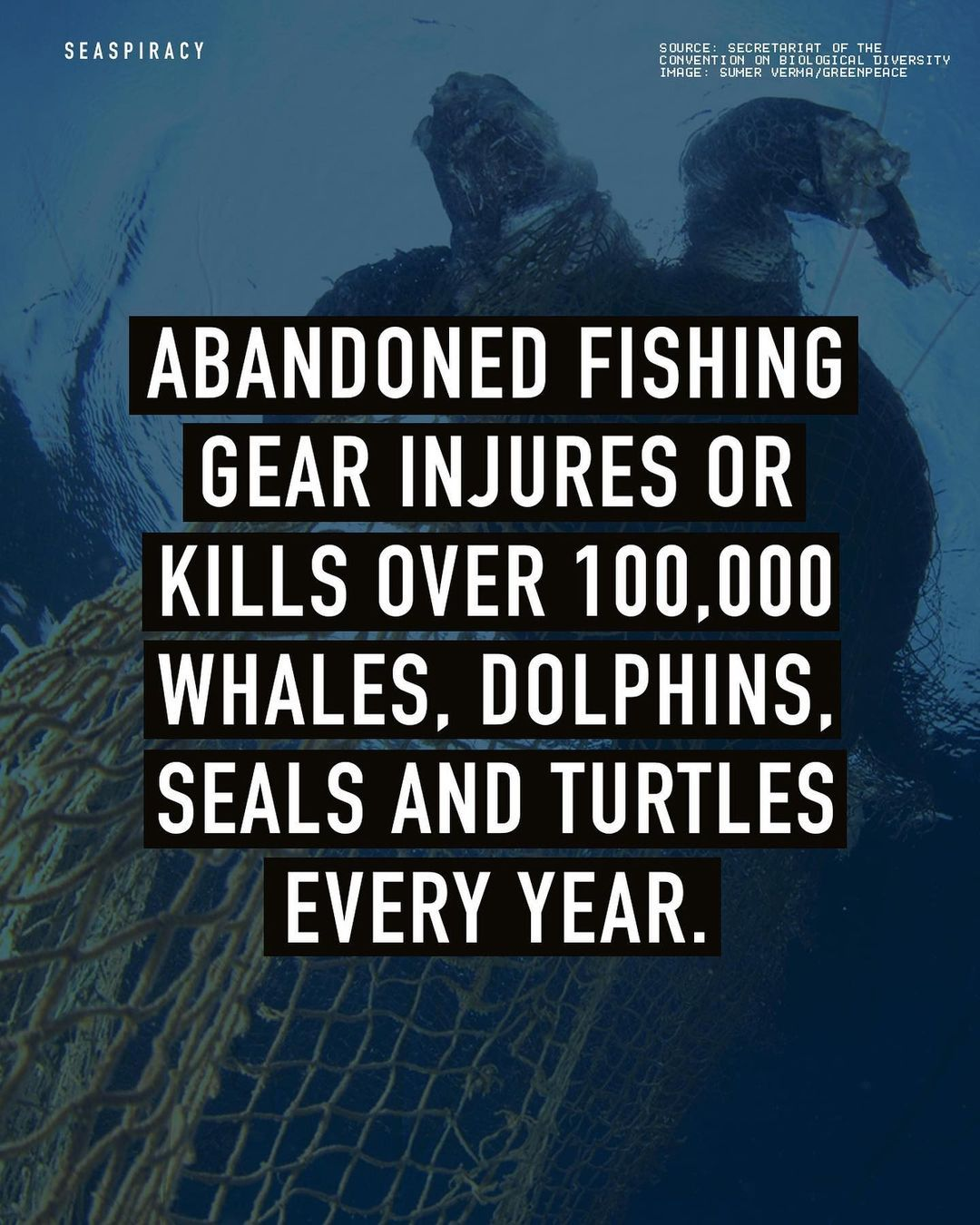Howstuffworks helps you spot truth from lies. Seaspiracy On Instagram All Plastic In The Oceans Is Harmful To Marine Life But One Type Of Plastic Pollution Is Especially Deadly Fishing Gear Why Is It I 2021