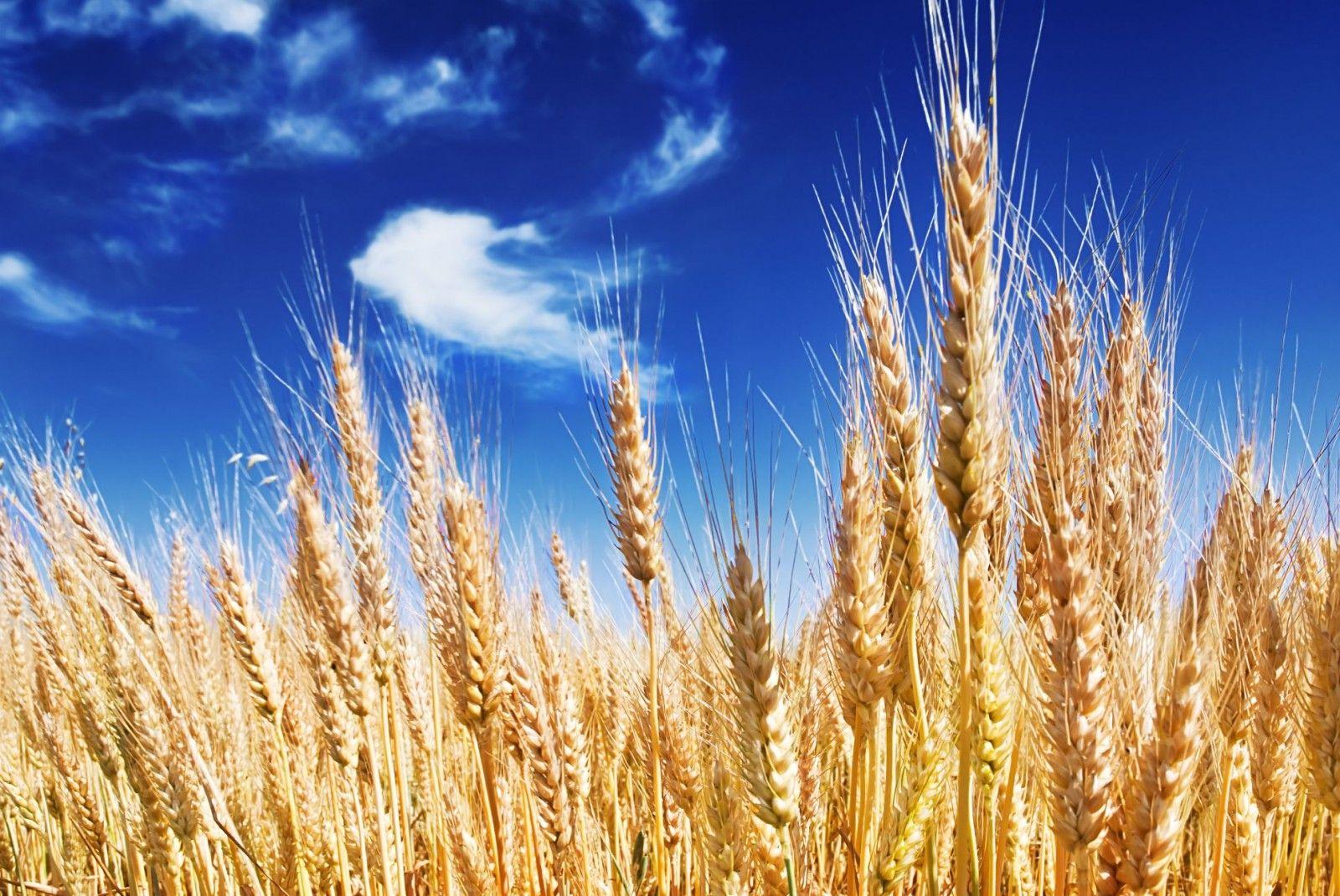 Sven Anderes bietet in seinem Mühli – Ladä , in Grotzenmühle Einsiedeln eine große Auswahl an Bio Mehl und Grotzenmühle-Mehl. In Einsiedeln, Schwyz ist der Bio und Reform Laden, für Mehl kaufen sehr bekannt. Die Bio Produkte sind immer frisch und mit Garantie.