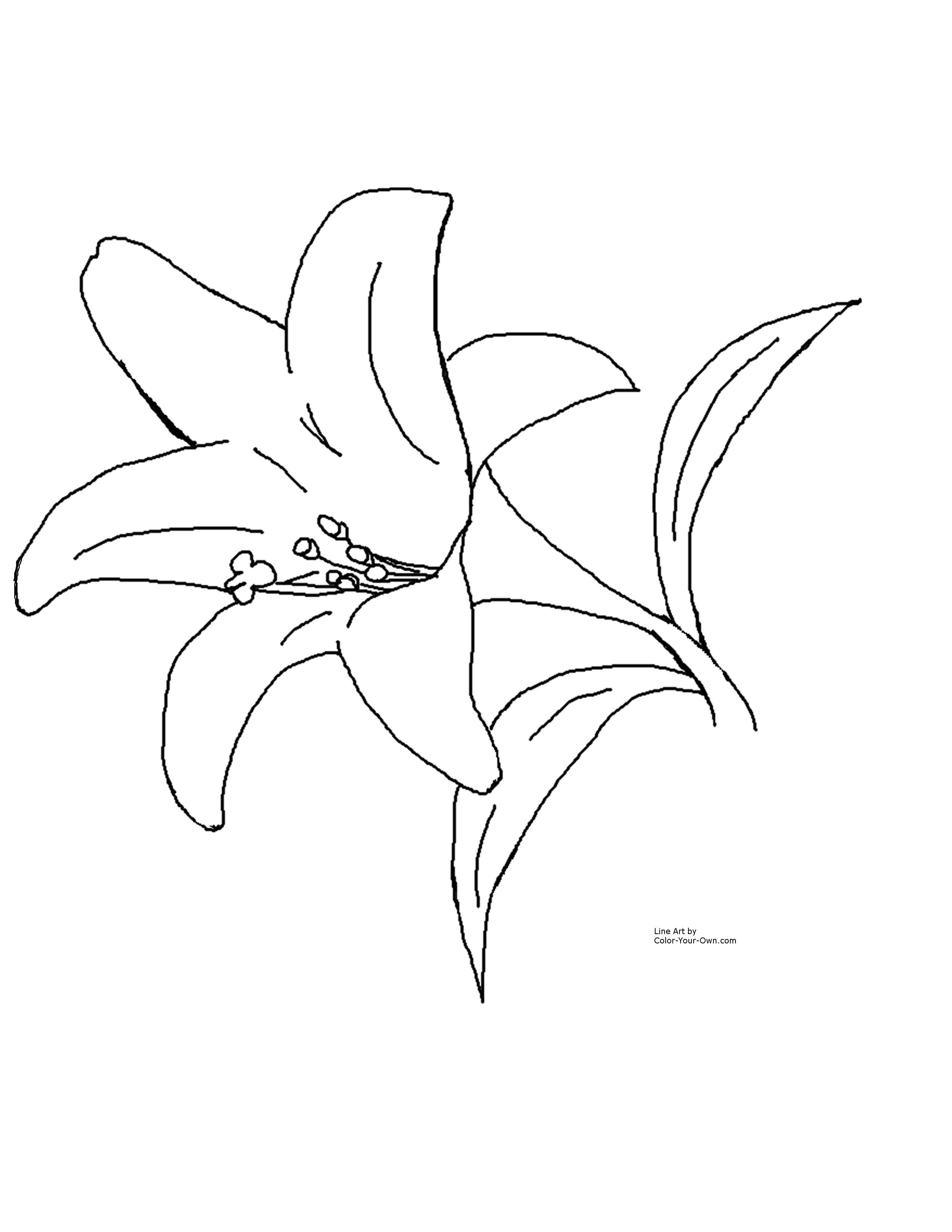 Easter Lily Clipart Images Pictures Becuo Flower Coloring