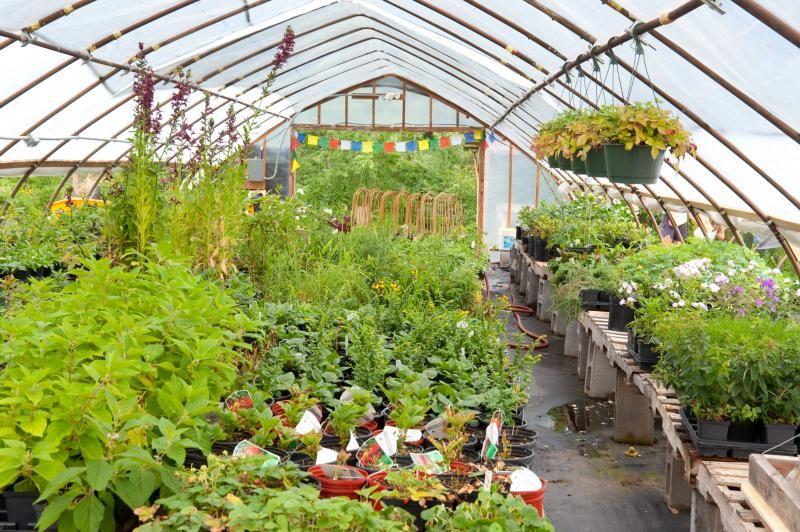 Nursery Cool Native Plants In Va