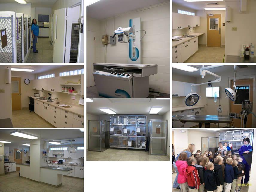 clinic area city, Veterinary hospital, Home decor