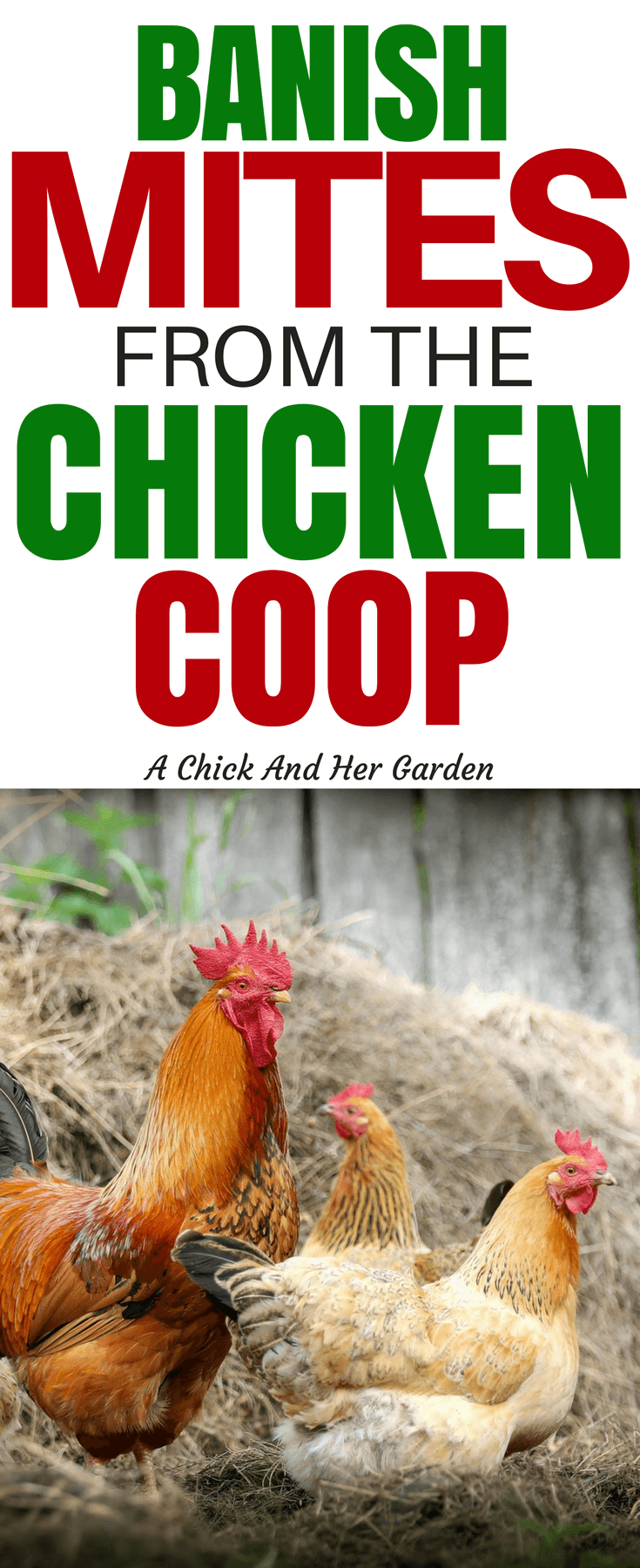 How To Treat Your Chicken Coop For Mites Chicken Coop Best Chicken Coop Raising Chickens