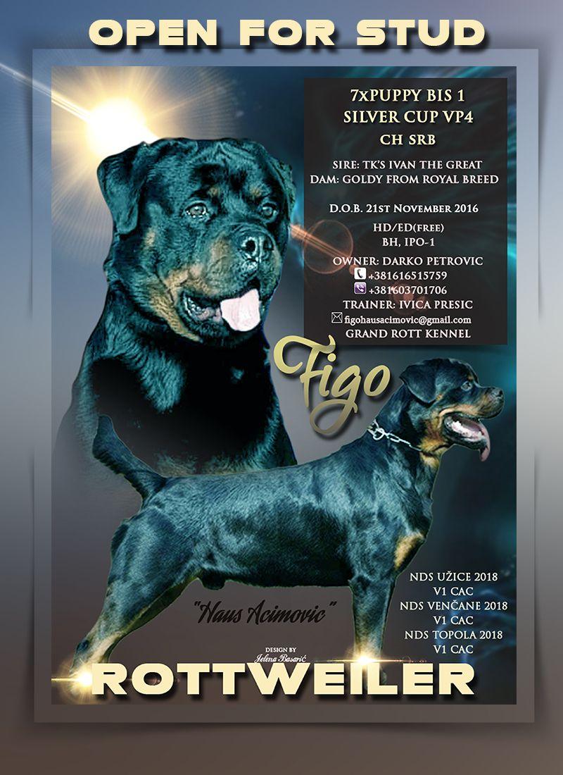 Open For Stud Figo Haus Acimovic Rottweiler Jelena Dogshows