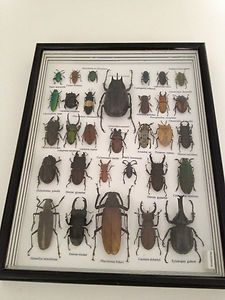 buy deep frames and mount insects