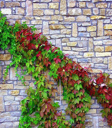 Enredadera Y Pared De Piedra Decoraciones De Jardín Muros De Piedra Plantas De Exterior