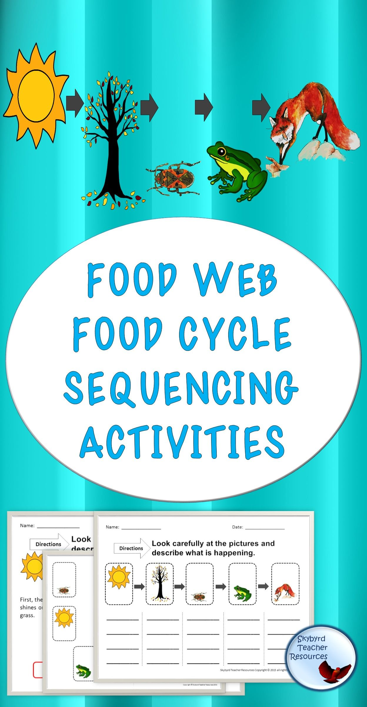 Food Chain Sequencing Great for Gen ED SPED ESL | TpT Science ...