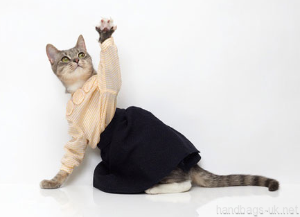 I don't like dressing up my cat but this was too cute not to pin :)