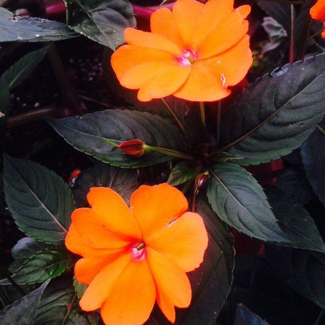 #flowers #flowergardening #flowerphotography #nature #natureaddict #floweraddict