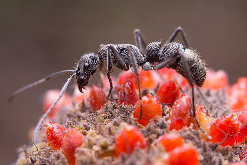 مكافحة النمل الاسود اكتشفي افضل طرق القضاء على حشرات المنزل الزاحفة حشرة النملة بالخل In 2021 Ant Pest Control Pest Control Ants