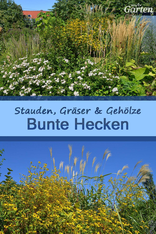 Bunte Hecke Mit Stauden Grasern Und Geholzen Stauden Hecke Naturgarten