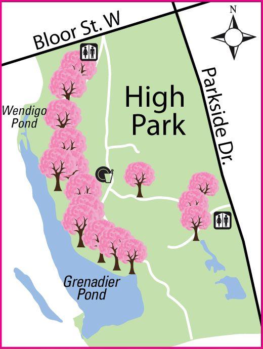 High Park Cherry Blossoms Cherry Blossom Season Cherry Blossom Blossom