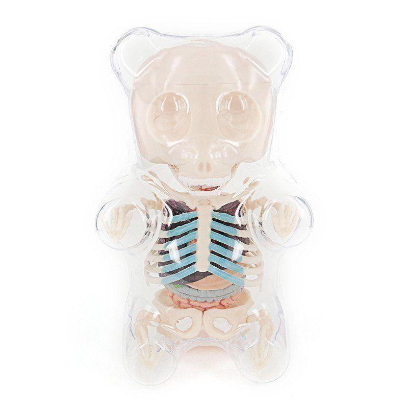 Gummi Bear Funny Anatomy | Anatomy and Creepy