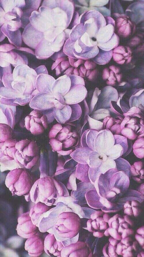 Purple Flowers Flower Wallpaper Purple Wallpaper Iphone Background