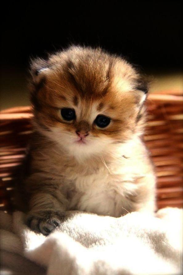 Cute Cats Cartoon Images Cute Kittens Colouring Pages Kittens Cutest Cute Baby Cats Baby Cats