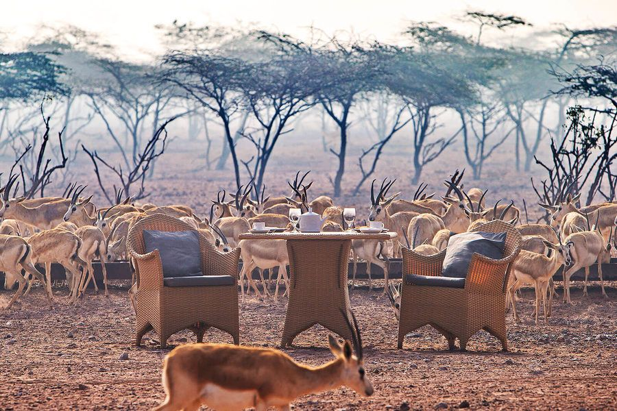Travel To Sir Bani Yas Island For A Taste Of The Safari Life Dubai Travel Travel Island