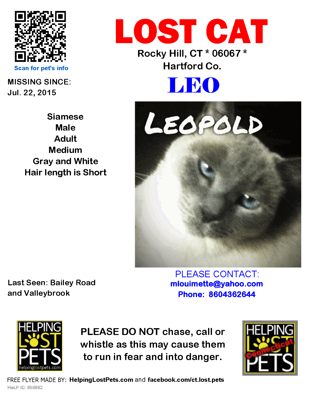 Lost Cat Siamese Rocky Hill Ct United States Lost Cat