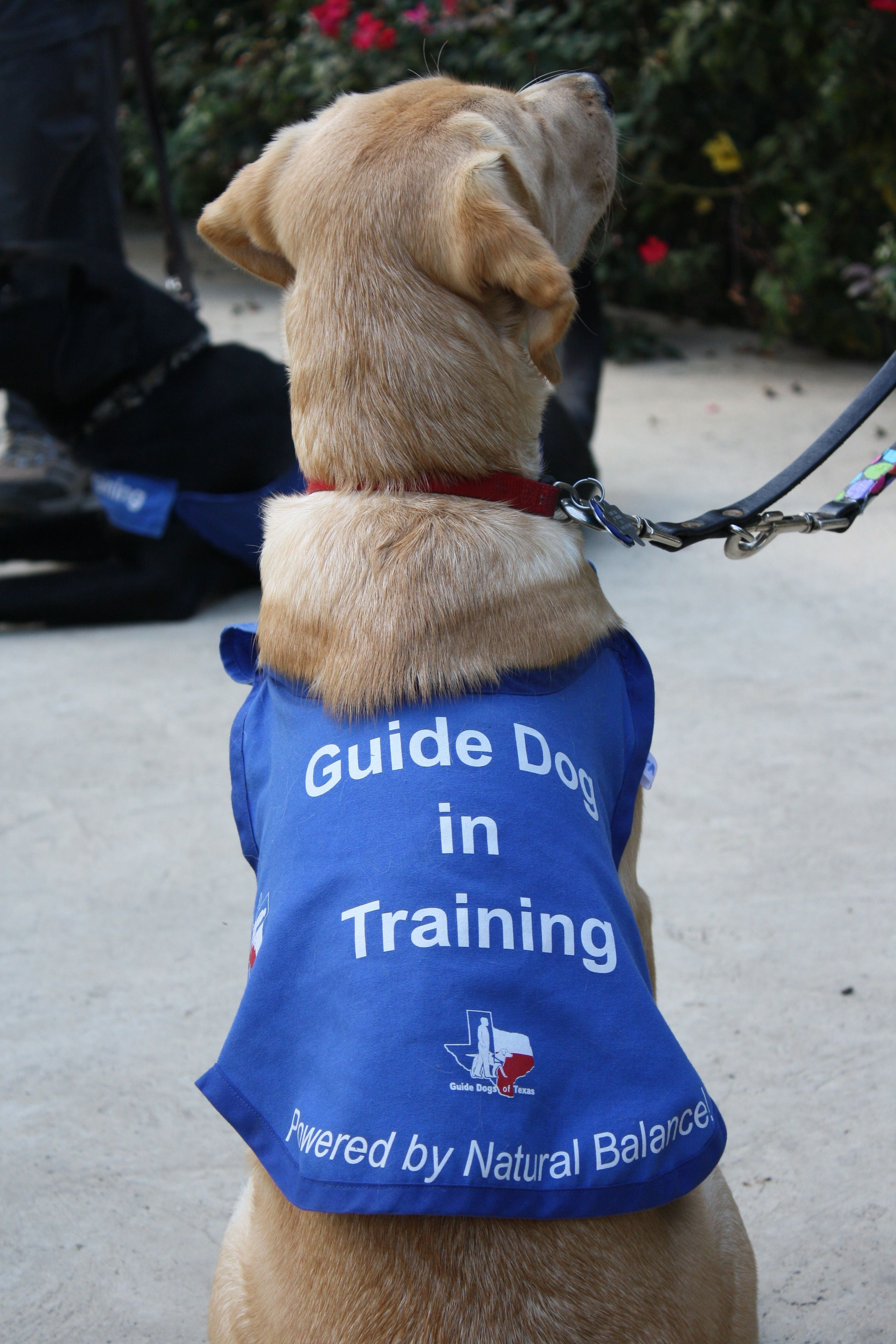 How to train a dog using simple tips and tricks click