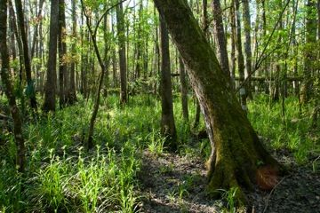 Recreation Guide to District Lands: Rice Creek Conservation Area