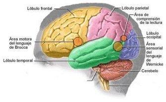PARÁLISIS CEREBRAL: EVALÚE SUS CONOCIMIENTOS: ¿Cuánto sabe de la parálisis cerebral? Responda este cuestionario para descubrirlo.