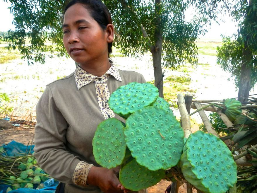 Believe it or not these are edible, woman selling in Cambodia.   Trueworldtravels.com