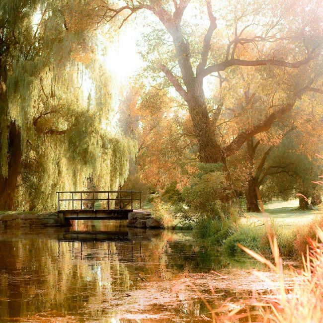 Summer haven! http://www.etsy.com/treasury/MTE0MDc2OTJ8MjcyMDQ4NTQ0NQ/sidneys-peace-and-love-..Rustic, woodland forest print, summer photography, olive green, weeping willow trees, botanic garden, summer. $25.00, via Etsy.