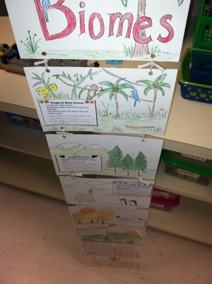 Science Biome Chart Another Way That Students Can Make A